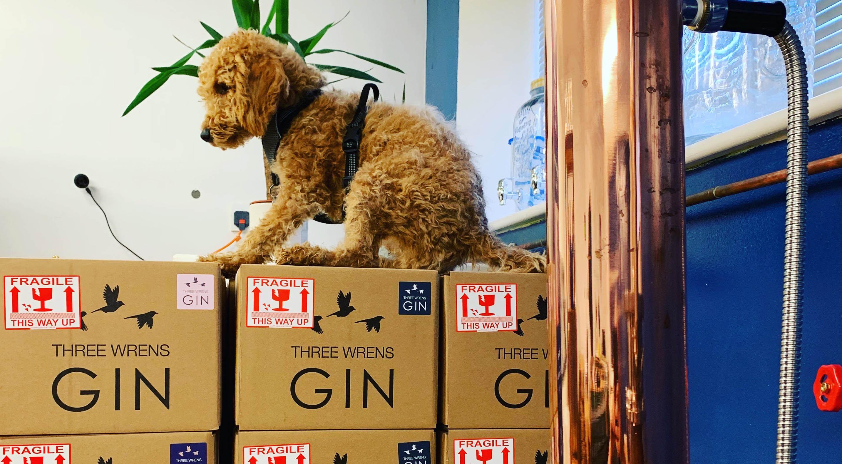 rocky distillery dog